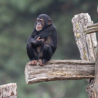 """<h4>Ontdek de leerzame voederpresentaties</h4>  <p><a class=""""btn btn-white"""" href=""""/op-safari/dieren/voederpresentaties"""">Bekijk voedertijden</a></p>"""