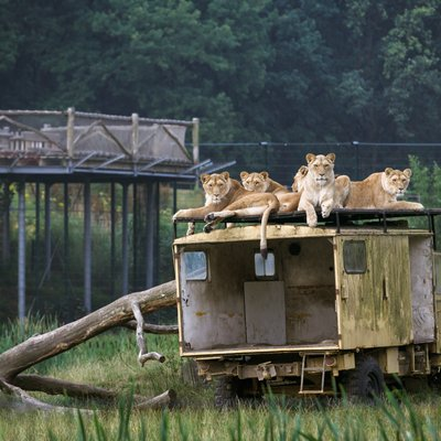 <h4>Ontdek het Safaripark</h4>