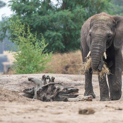 """<h4>Oog in oog met wilde dieren</h4>  <p><a class=""""btn btn-full-white"""" href=""""/op-safari/dieren"""">Ontdek alle dieren</a></p>"""