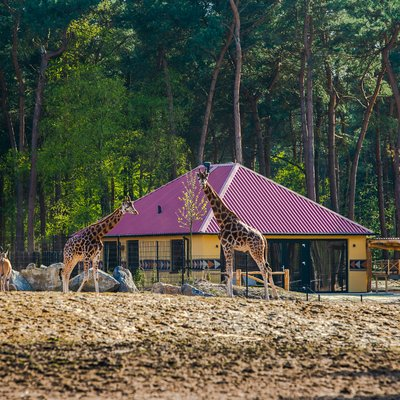 <p>A last minute stay&nbsp;in a lodge</p>