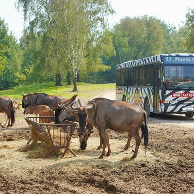 """<p class=""""headingwhite"""">Beste dierentuin van Nederland 2017</p>  <a class=""""btn btn-white"""" href=""""/nieuws/safaripark-beekse-bergen-verkozen-tot-beste-dierentuin-van-nederland-2017"""">Diamond Themepark Awards 2017</a>"""