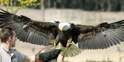 <h4>Birds of prey safari</h4>