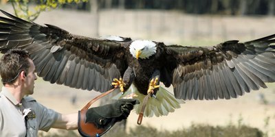 "<h4 class=""headingwhite"">Birds of prey safari</h4>"