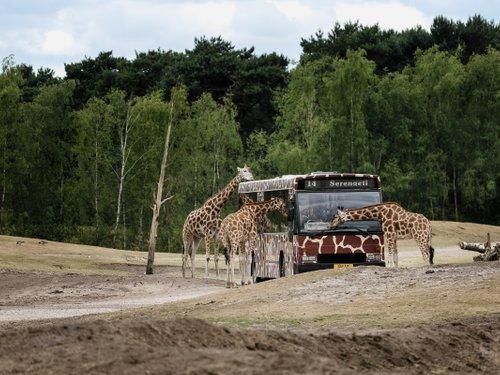 <h4>Bussafari</h4>