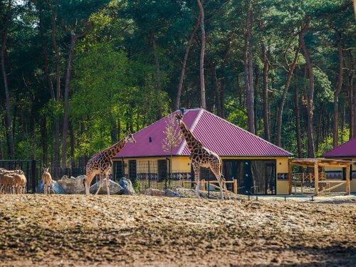 <h4>Safari Resort</h4>