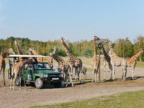 "<h4 class=""headingwhite"">Safaripark</h4>"